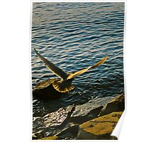 White Rock Sea Gull Poster