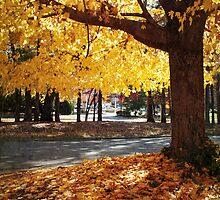 October Morning by Jennifer Rhoades