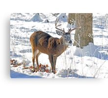 Winter Forage Metal Print