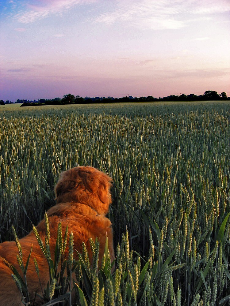 The adventures of Rusty the Golden retriever by Paul Hickson