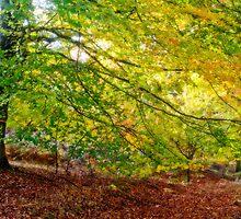 Autumn Colours by Ann Garrett
