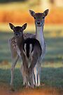 Fallow Doe and Offspring by Neil Bygrave (NATURELENS)