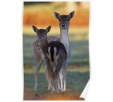 Fallow Doe and Offspring Poster