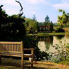 Across the Mill Pond by Drew Walker