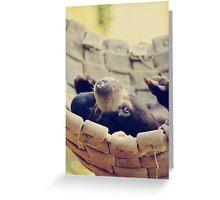 Sweet Little Baby Bear Greeting Card