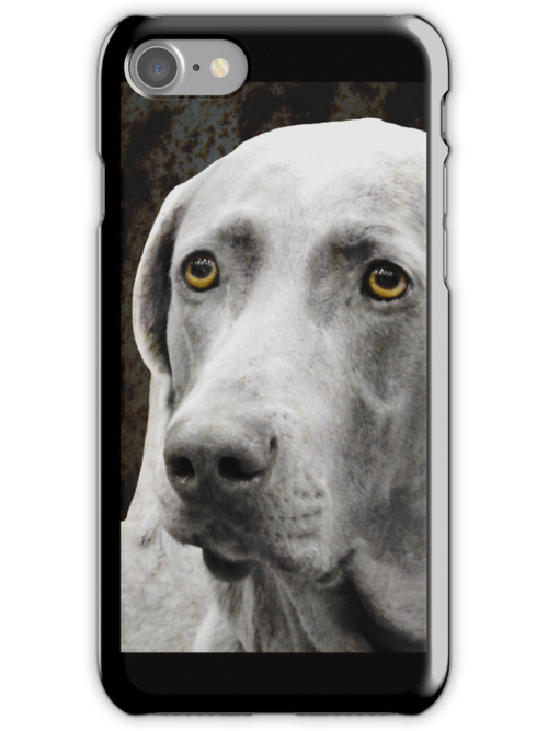 The Soulful Eyes of the Weimaraner - iphone case by Marcia Rubin