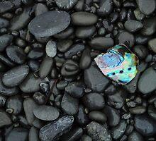 Paua Shell by mollymop3