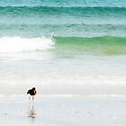 Black Oyster Catcher by mollymop3
