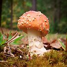 Amanita Muscaria by Path-Finder