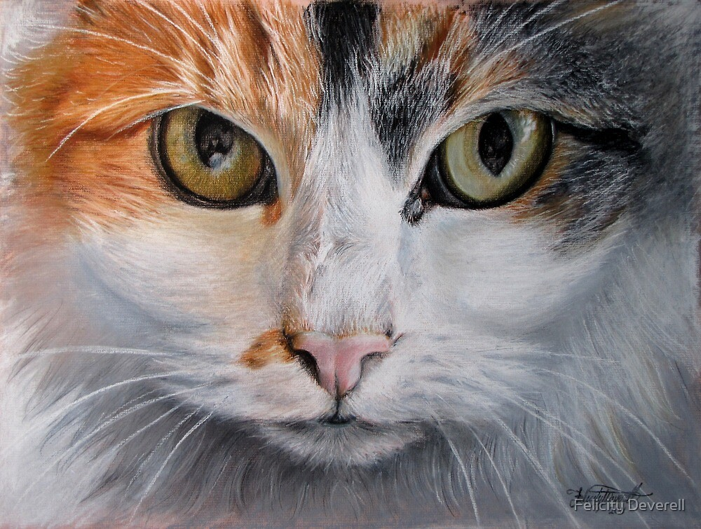 Pansy Cat by Felicity Deverell