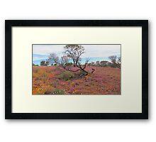Spring Time Australian Desert  Framed Print