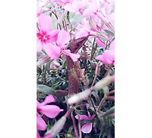 Anole in the Phlox Photographic Print