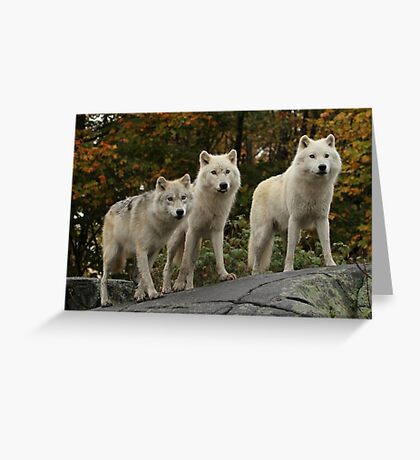 The guardians of the pack Greeting Card