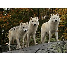 The guardians of the pack Photographic Print