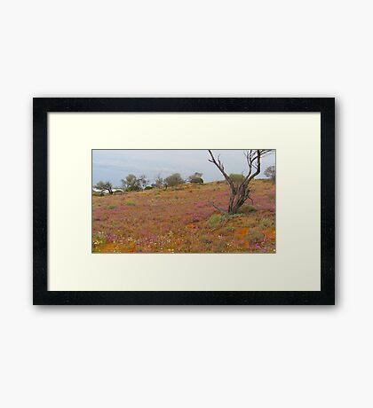 Desert Landscape South Australia Framed Print