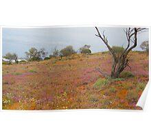 Desert Landscape South Australia Poster