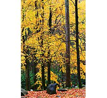 MAPLES,AUTUMN,CHIMNEYS PICINIC AREA Photographic Print