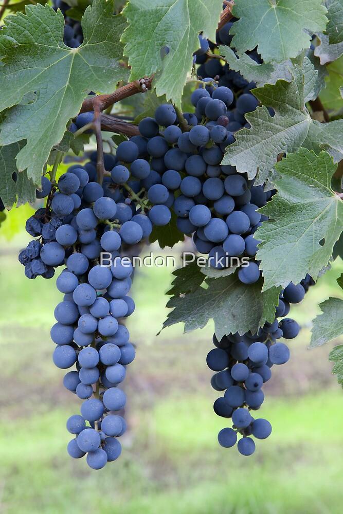 Grapes, Napa Valley, California by Brendon Perkins