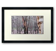 Tree scape Australia  Framed Print