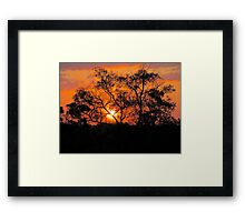 A gum tree kissed by the setting Sun. Framed Print