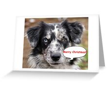 Blue Merle Portraite Merry Christmas Greeting Card