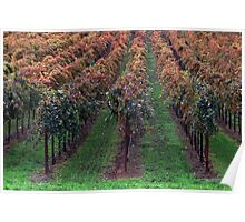Fall Colors in Napa Valley, California Poster
