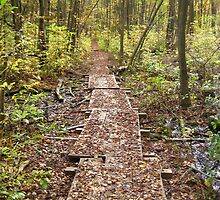 Woodland Boardwalk by P.M. Franzen