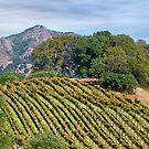 Private Hilltop Vineyard, Sonoma County, California by Brendon Perkins