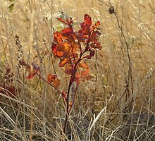Brilliant Wild Rose Leaves by Kathi Huff
