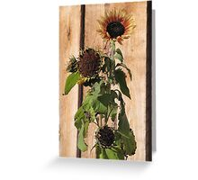 Frosted Sunflower Greeting Card