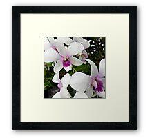 White Orchids Framed Print