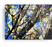 Bird Collection 002 Metal Print