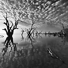 Banks of Lake Bonney by Bill  Robinson