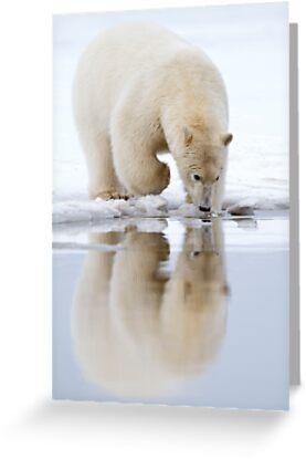 Mirror, Mirror... by Gina Ruttle  (Whalegeek)