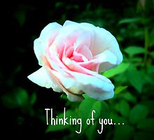 Thinking of you... by mariatheresa