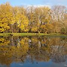 Autumn Gold Reflections by lorilee