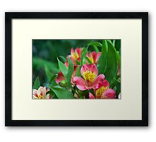 Pink & Yellow Flower! Framed Print