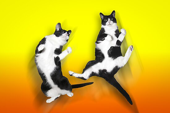 Feline It! - Color Version by John Hartung