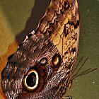 iPhone Case - A Buckeye Butterfly by Eileen Brymer
