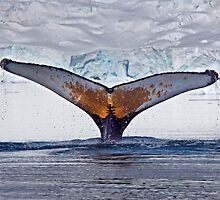 Having a Whale of a Time (Humpback Whale, Paradise Bay, Antarctic Peninsula) by Krys Bailey