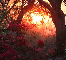 Bougainvillea Dawn by Antionette