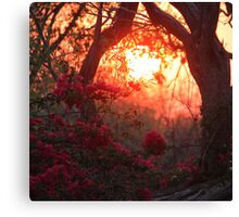 Bougainvillea Dawn Canvas Print