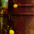 Yellow flower by Silvia Ganora