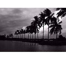 Coconut trees Photographic Print
