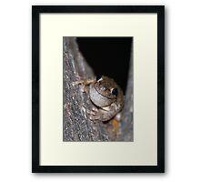 Perons Tree Frog Framed Print