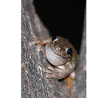Perons Tree Frog Photographic Print