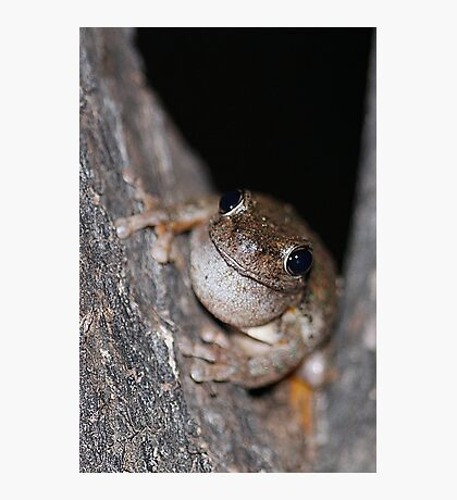 Perons Tree Frog Photographic Print