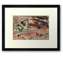 Mulga Snake Framed Print