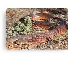 Mulga Snake Canvas Print