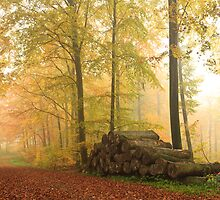 Soon it's winter..... (panoramic) by Steen Nielsen